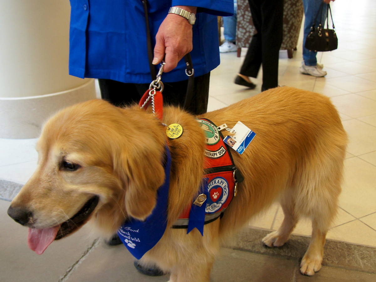 """the reasons why dogs should be certified as service and therapy animals Examples of animals that fit the ada's definition of """"service animal"""" because they  have  under title ii and iii of the ada, service animals are limited to dogs  or  proof that the animal has been certified, trained, or licensed as a service animal."""
