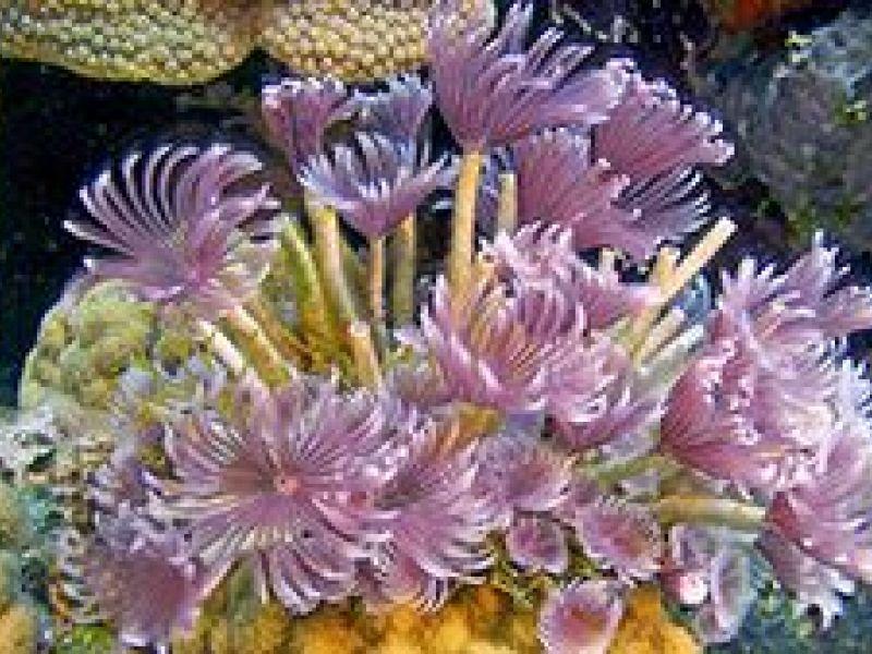 Tinest Reef Creatures Figure Big Maritime Aquarium 39 S