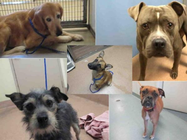 Ind. animal shelter wants Pokemon Go players to walk dogs