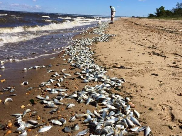Hundreds of thousands of dead fish wash into New Jersey marina