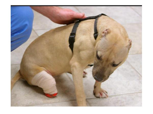Nassau Woman Gets Prison Time for Animal Abuse That Left Puppy Disfigured