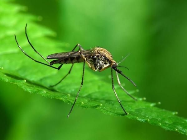 First West Nile Related Death Reported in Yankton County