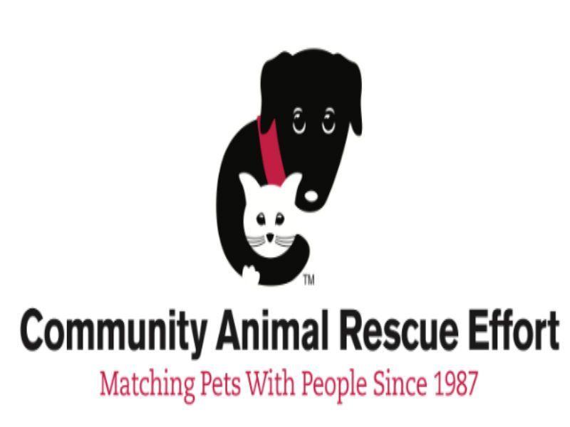 Dog Rescue Niles Il