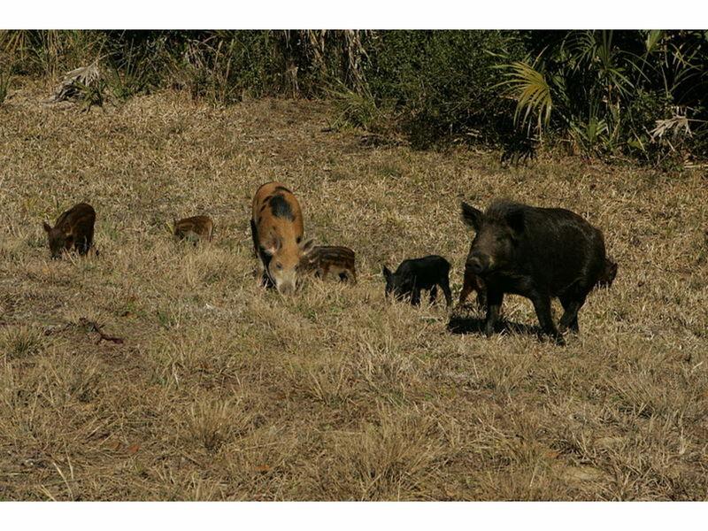 Big Game Hunting Ranches California
