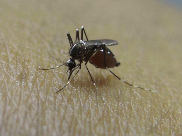 Spokane man tests positive for West Nile virus