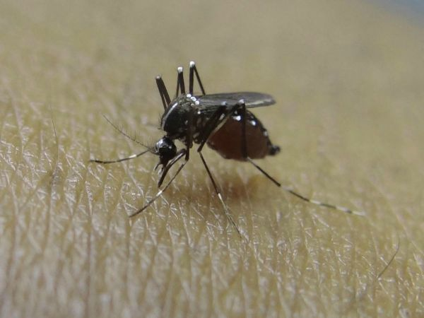 Human West Nile Case Found in LaSalle County