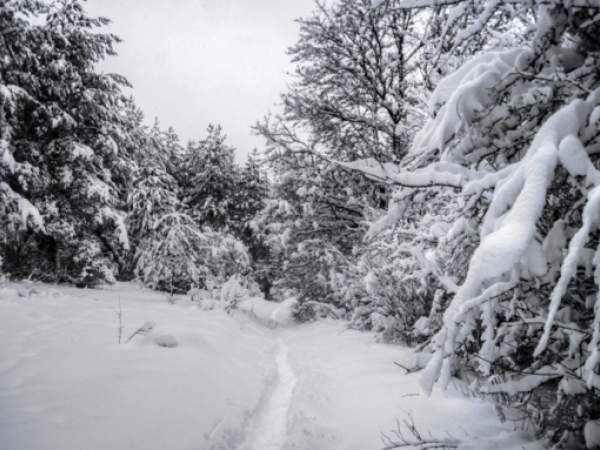 Upstate, Carolina winter outlook revealed in 200th edition of 'Farmer's Almanac'