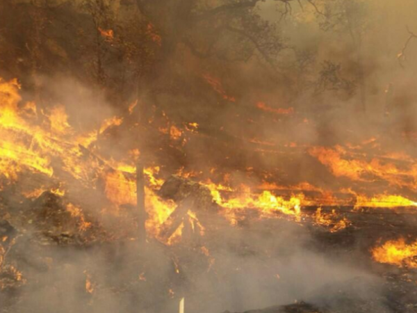 Fire burns near Hollywood sign - Tweets, videos, and reaction