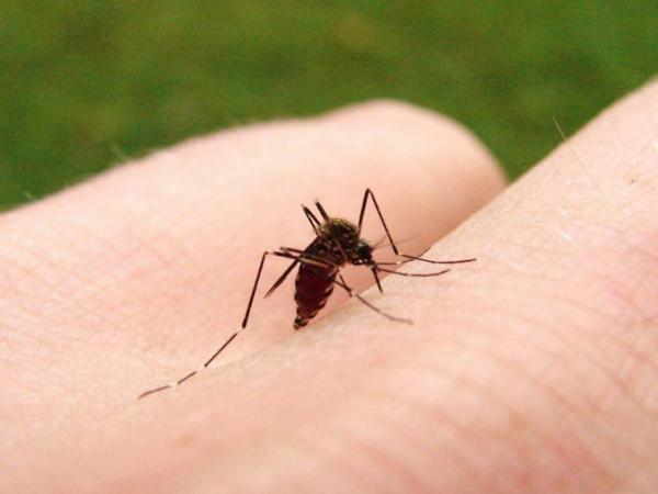 Mosquitos in Butte County test positive for West Nile Virus