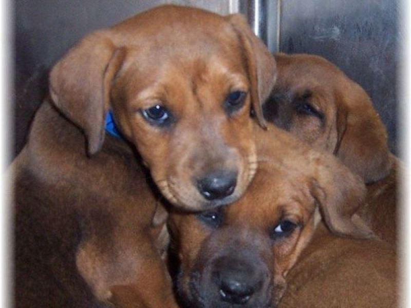 Best Canned Dog Food >> Animal Shelter in Urgent Need of Canned Pet Food Donations - Oak Forest, IL Patch