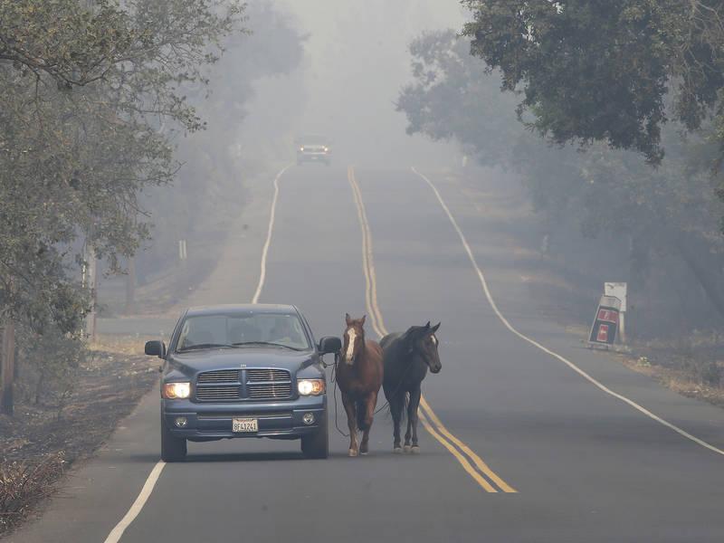 Dog Rescue Sonoma County California