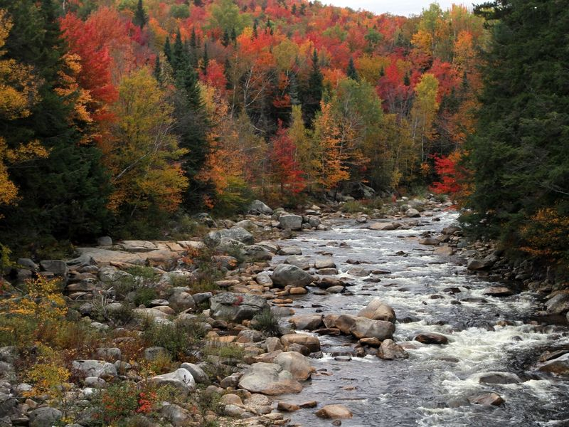 Minnesota fall foliage 2017 peak dates best time to see for When will the leaves start changing 2017