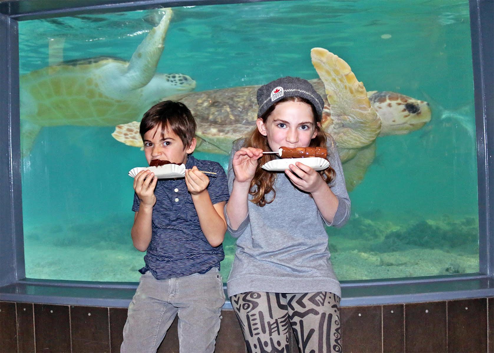 The Norwalk Maritime Aquarium Hosts Chocolate Expo