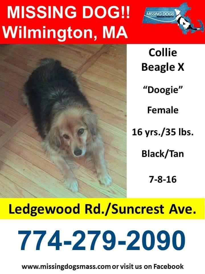 Woburn Missing Service Dog