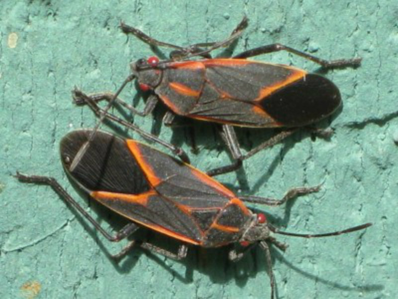 5 Bugs Including Stink Bugs Crawling Into Your House