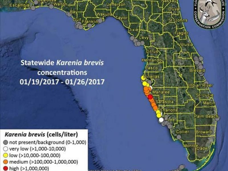 Red Tide Woes Continue Along West Florida Coast Sarasota FL Patch - Map of west coast of florida