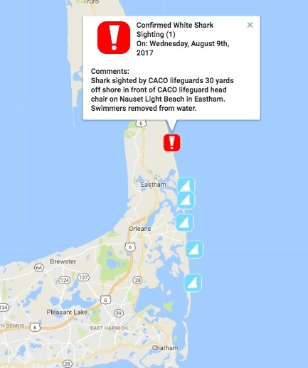 Shark Sighting At Cape Cod Beach Swimmers Flee  Plymouth MA Patch