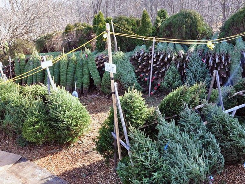 Superior Free Christmas Tree Pick Up Part - 9: Northampton Twp Announces Christmas Tree Pickup Schedule