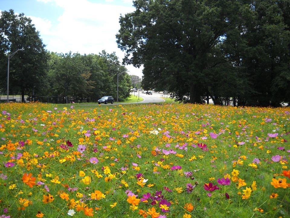 Garden State Parkway Wildflower Seeds Now Available In New Jersey - Wild flower garden