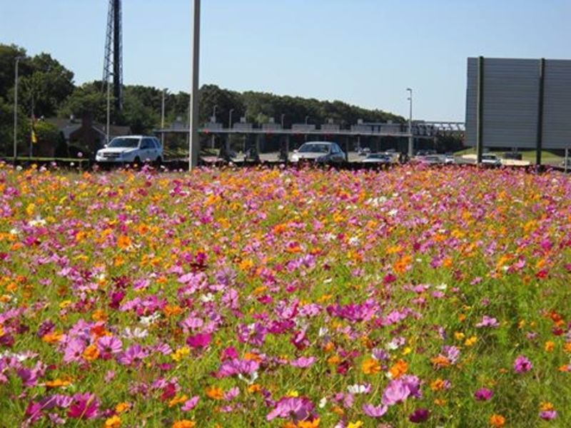 Garden State Parkway Wildflower Seeds Now Available In New ...