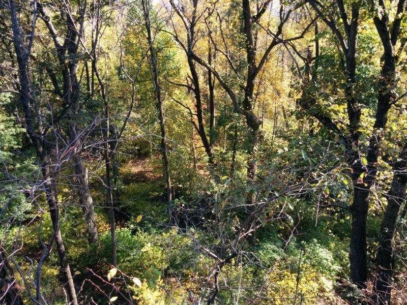 single bbw women in cedar grove Cedar grove washington dating and cedar grove washington singles - women & men waiting to meet you.