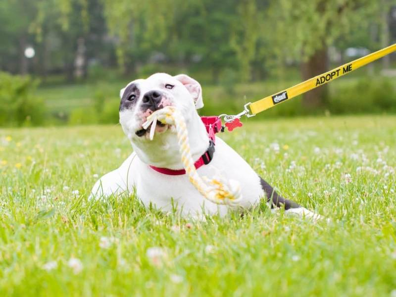 How To Make Your Dog A Service Dog Nj