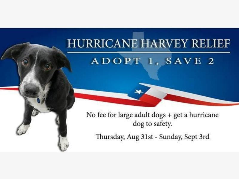 Hurricane Relief Dog Adoption