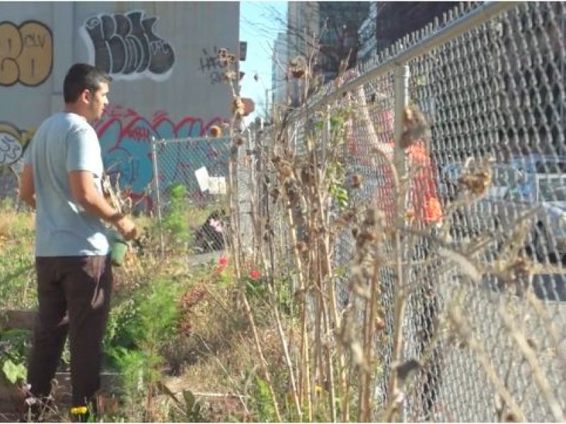 Harlem Community Gardeners Petition City Not To Sell Green Space
