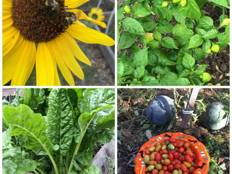 Union County Community Garden Grants Available Summit NJ Patch