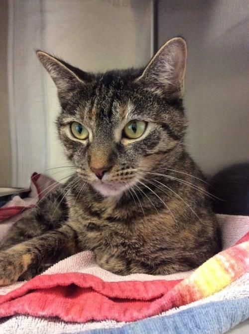 6 Cats Available For Adoption In Somerset County Bridgewater Nj Patch