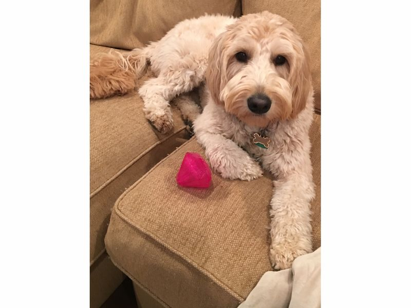 Search Is On For Summit S Pet Of The Week Summit Nj Patch