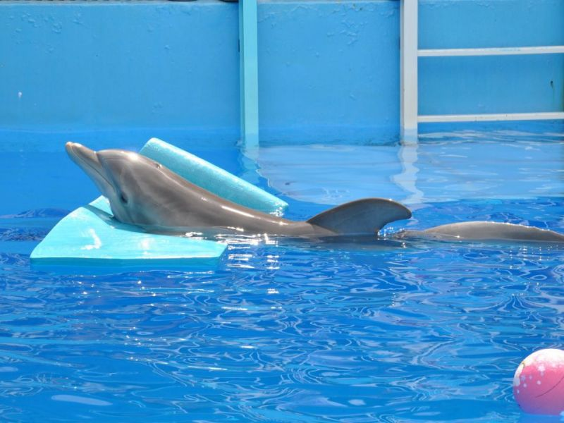 Clearwater Marine Aquarium Offering Camps Throughout