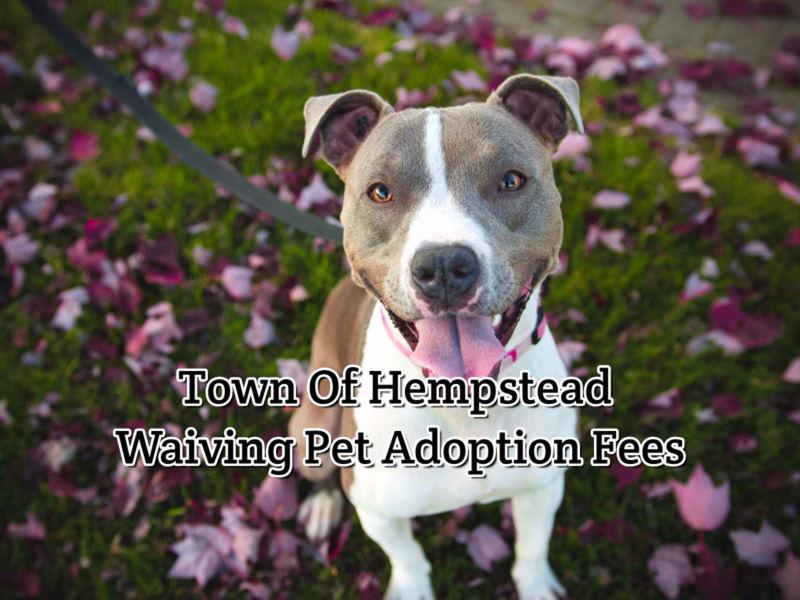 Pet Adoption Long Beach Ny