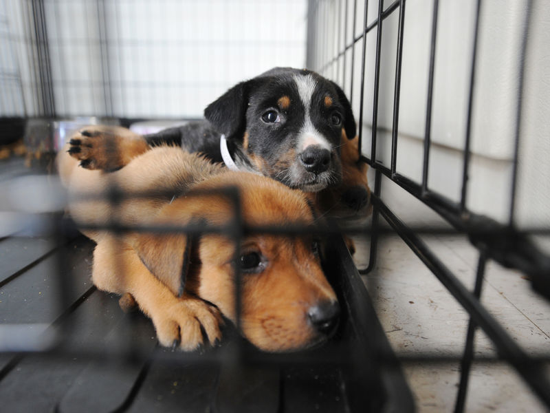 Helping After Harvey: 150 Animals Moved To Tennessee From Texas Shelters