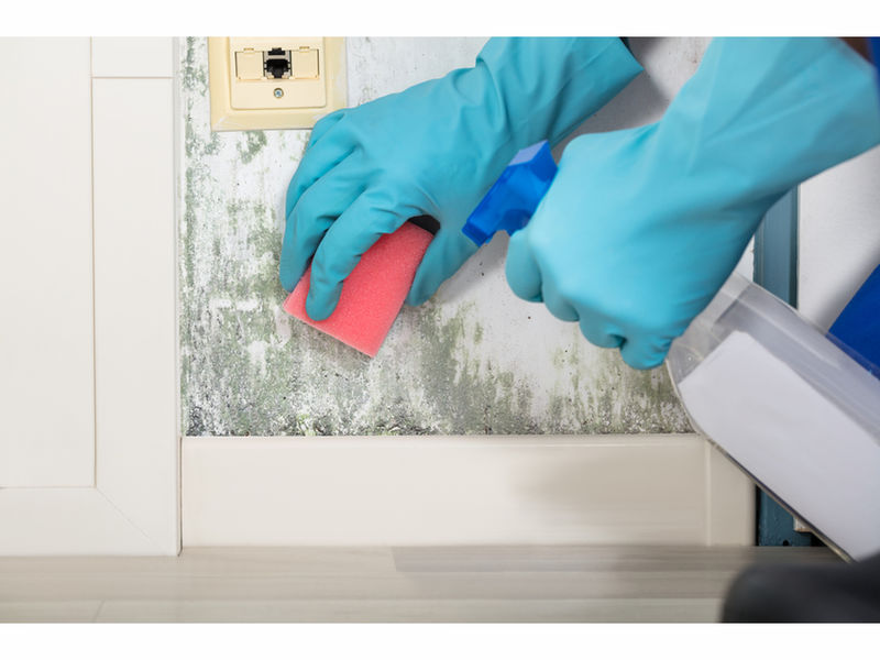 Mold In Bathroom Landlord Responsibility laws regarding mold and rental properties in new jersey - mold
