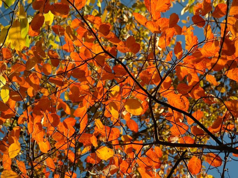 fall foliage 2017 the best time to see leaves change in