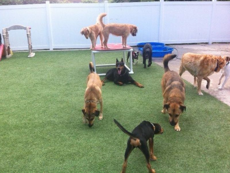 Dog Daycare High Park