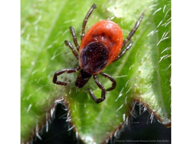 Dangerous Tick Borne Disease Spreads To Nj Cdc Warns Hopatcong Nj Patch
