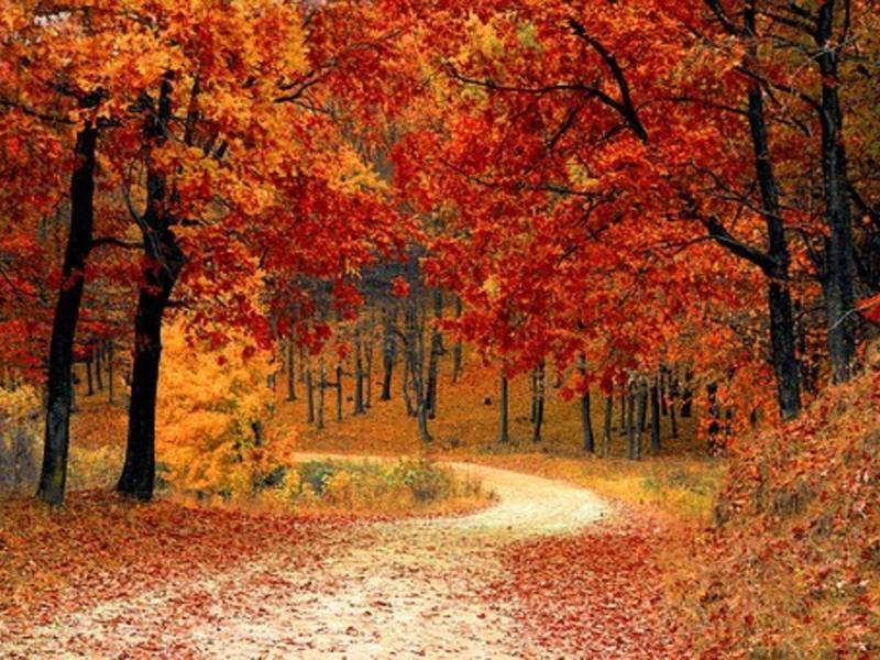 Fall Foliage 2017 Best Time To See Leaves Change In Maryland